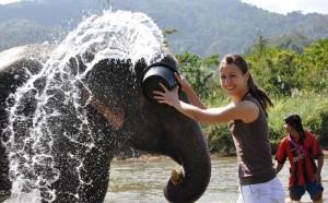 Elephant-bathing2-300x186